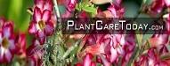 plantcaretoday